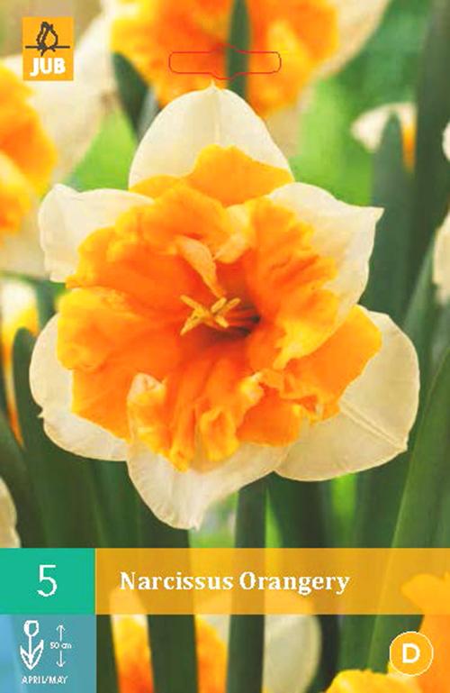 Narcissus 'Orangery' - paasbloem