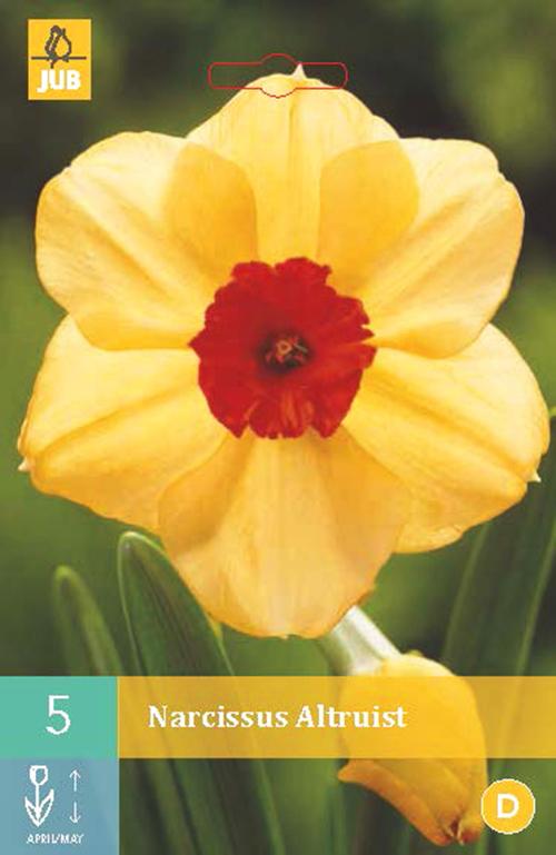Narcissus 'Altruist' - paasbloem