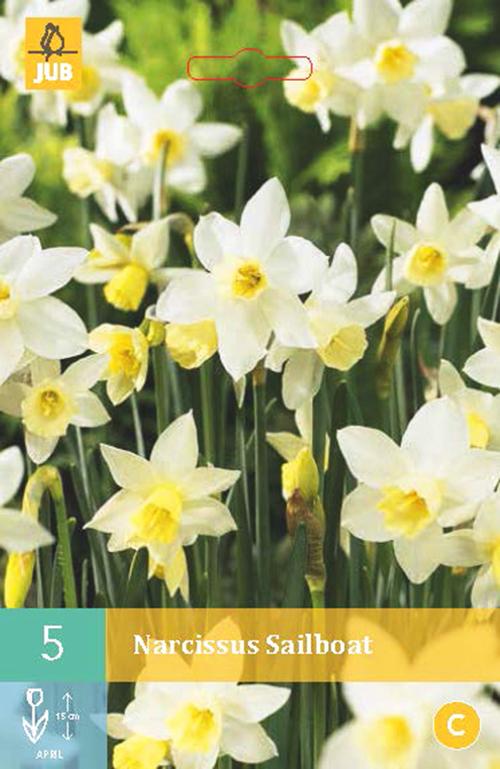 Narcissus 'Sailboat' - paasbloem