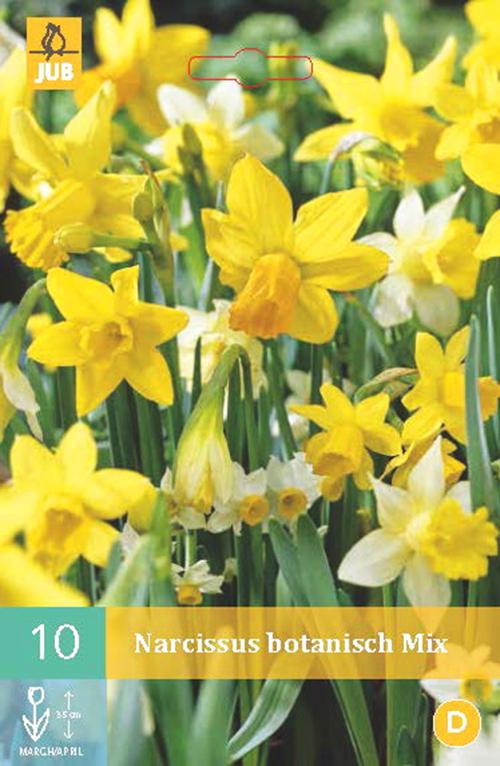 Narcissus botanisch mix - paasbloem
