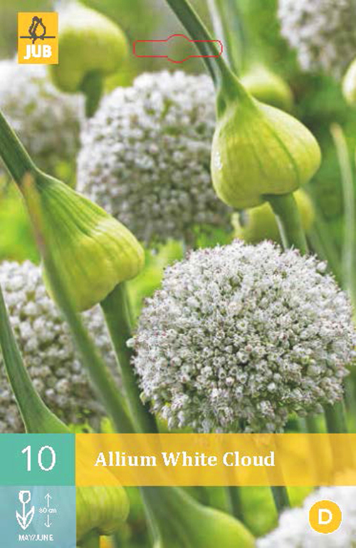 Allium 'White Cloud' - sierui
