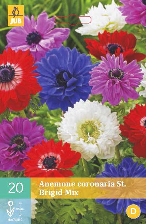 Anemone coronaria 'St. Brigid mix' - anemoon
