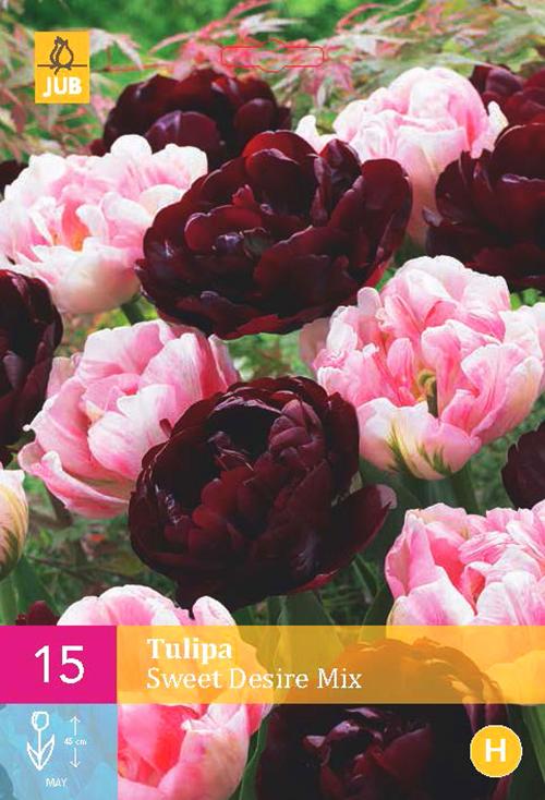 Tulipa 'Sweet Desire Mix'  XXL - tulp