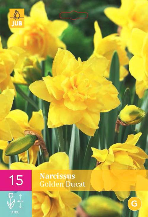 Narcissus 'Golden Ducat'  XXL - paasbloem