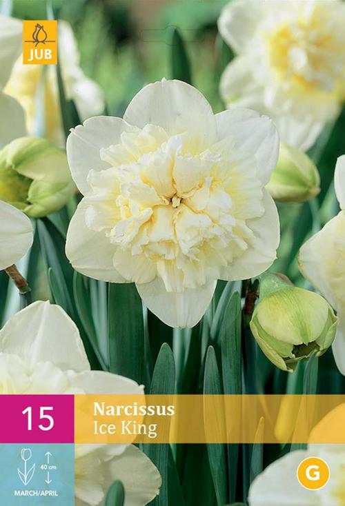 Narcissus 'Ice King'  XXL - paasbloem