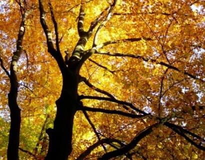 Prachtig die herfstbladeren, maar wat doe ik ermee?