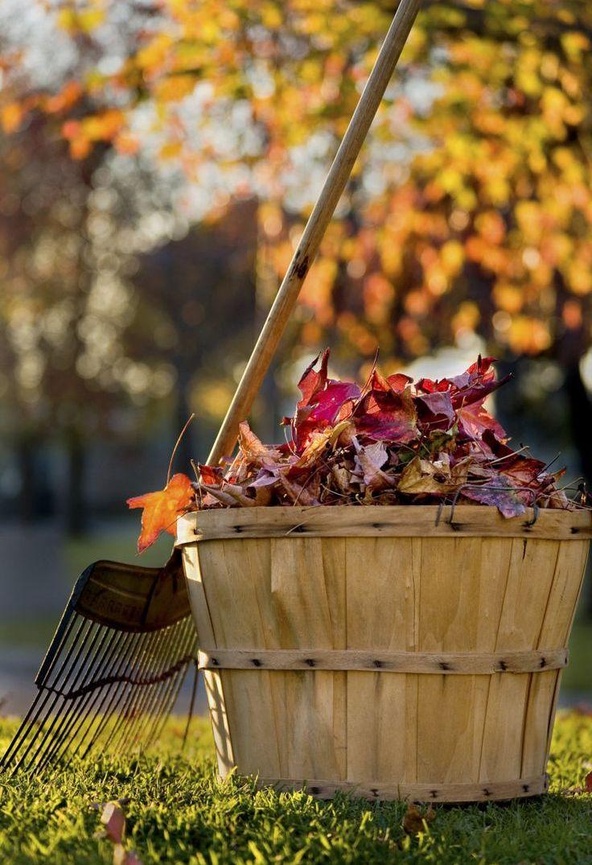 herfstblad-opruimen