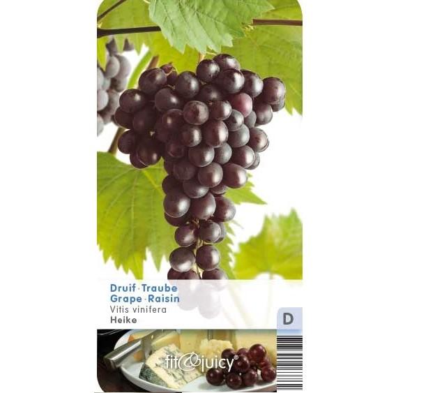 Vitis 'Heike' - Pitloze blauwe druif