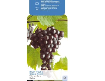 Pitloze blauwe druif 'Heike' pot 5 liter - Pitloze blauwe druif