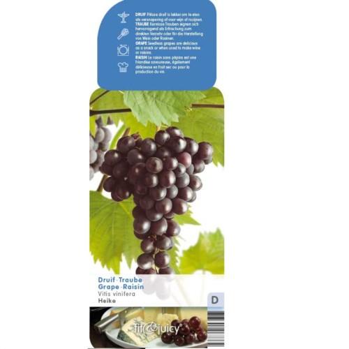Pitloze blauwe druif 'Heike' pot 3 liter