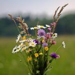 Snijbloemen uit eigen tuin? Deze planten zijn hiervoor geschikt.