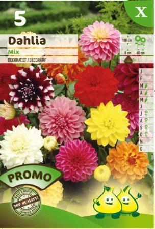 Dahlia mix - Dahlia