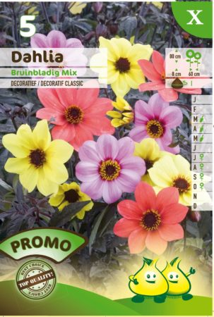 Dahlia bruinbladig mix - Dahlia