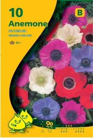 Anemone coronaria 'De Caen' - Anemoon