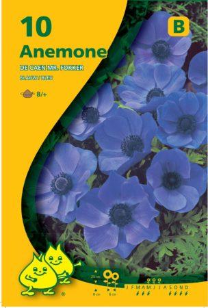 Anemone coronaria 'Mr. Fokker' - Anemoon
