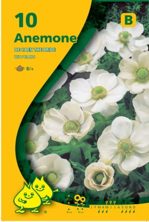 Anemone coronaria 'The Bride' - Anemoon