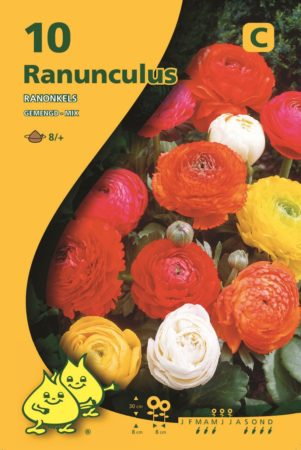 Ranunculus mix - Ranonkel