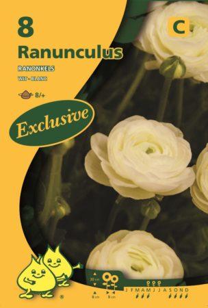 Ranunculus wit - Ranonkel