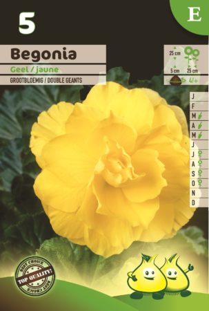 Begonia geel - Begonia