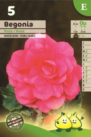 Begonia roze - Begonia