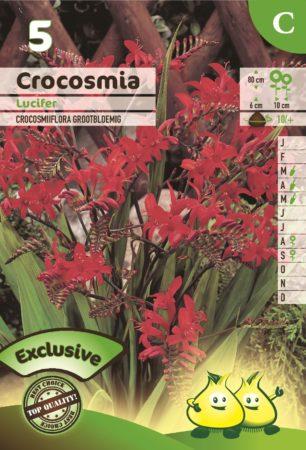 Crocosmia 'Lucifer' - Montbretia