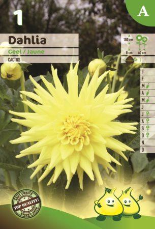 Dahlia geel - Dahlia