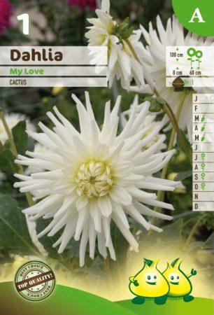 Dahlia 'My Love' - Dahlia