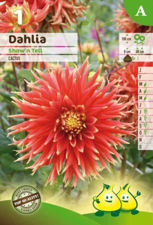 Dahlia 'Show 'n Tell' - Dahlia