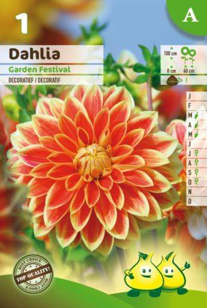 Dahlia 'Garden Festival' - Dahlia