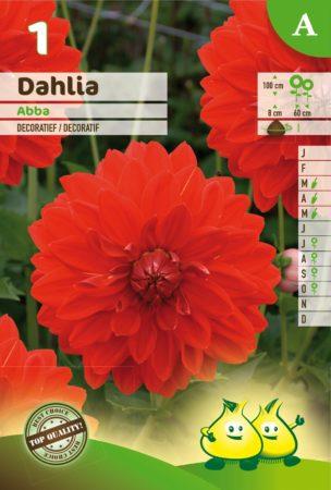 Dahlia 'Abba' - Dahlia