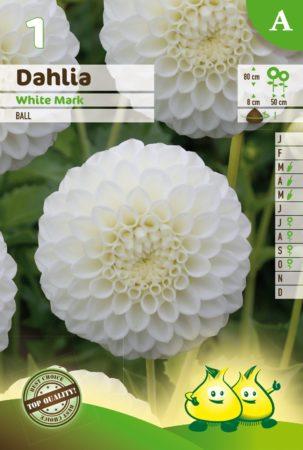 Dahlia 'White Mark' - Dahlia