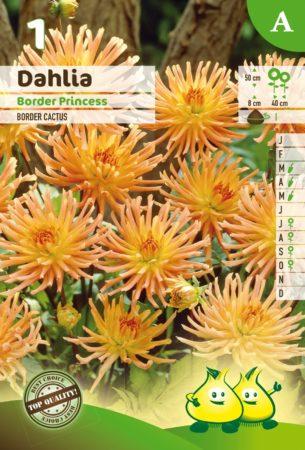 Dahlia 'Border Princess' - Dahlia