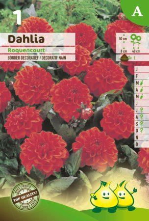 Dahlia 'Rocquencourt' - Dahlia