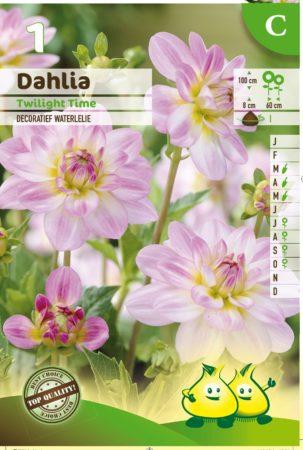 Dahlia 'Twilight Time' - Waterlelie