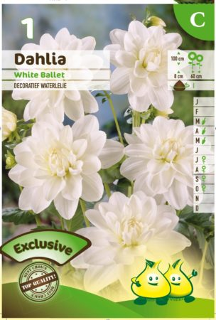 Dahlia 'White Ballet' - Waterlelie