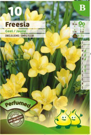 Freesia geel -