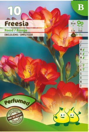 Freesia rood -