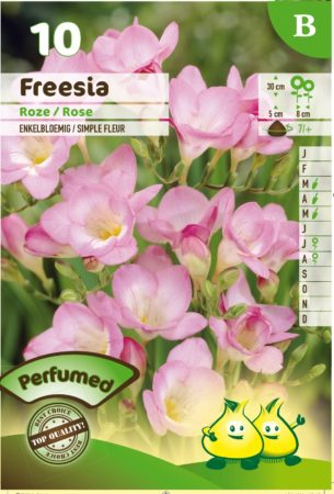Freesia roze -