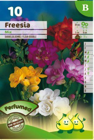 Freesia dubbel mix -