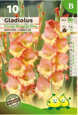 Gladiolus 'Princess Margaret Rose' - Gladiool