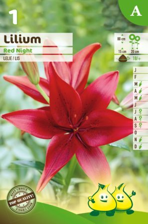 Lilium 'Red Night' - Lelie