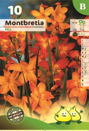 Montbretia mix - Montbretia