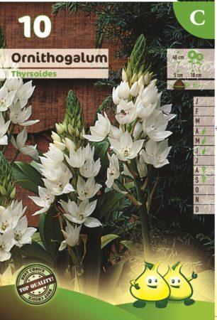 Ornithogalum thyrsoides - Vogelmelk of Zuidenwindlelie