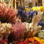 Droogbloemen uit eigen tuin? Deze planten zijn hiervoor geschikt.